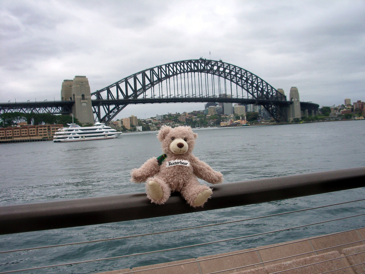 Baxterbear-around-world-sydney