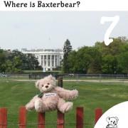 Baxterbear-Advert-7th-dec